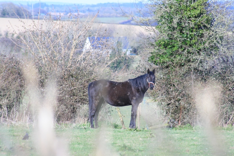 A Horse in Ireland