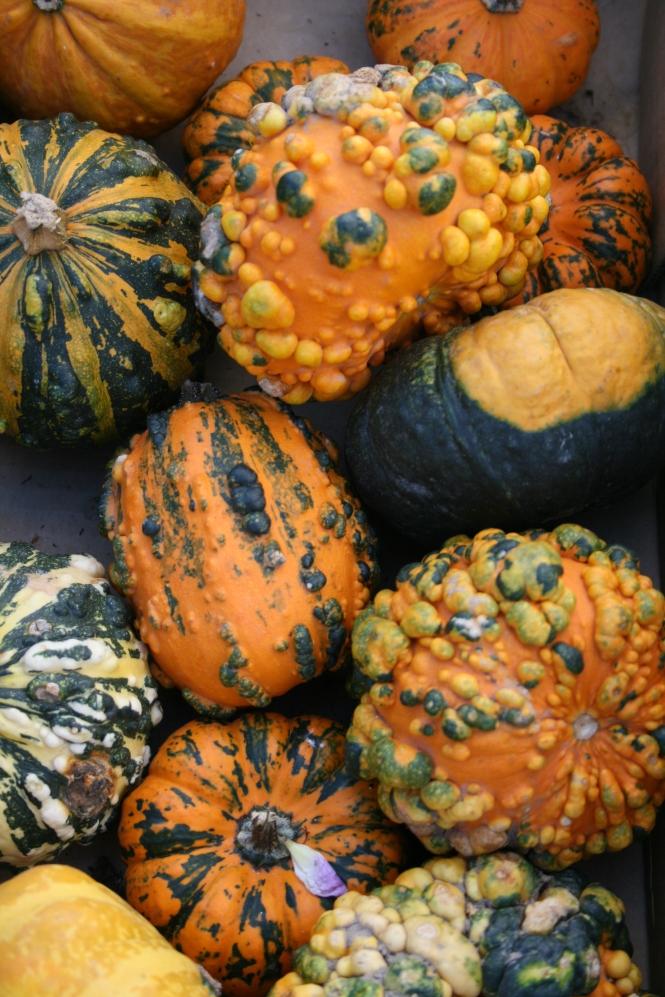 Pumpkins in Denmark